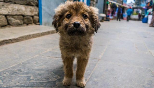 castração cães e gatos