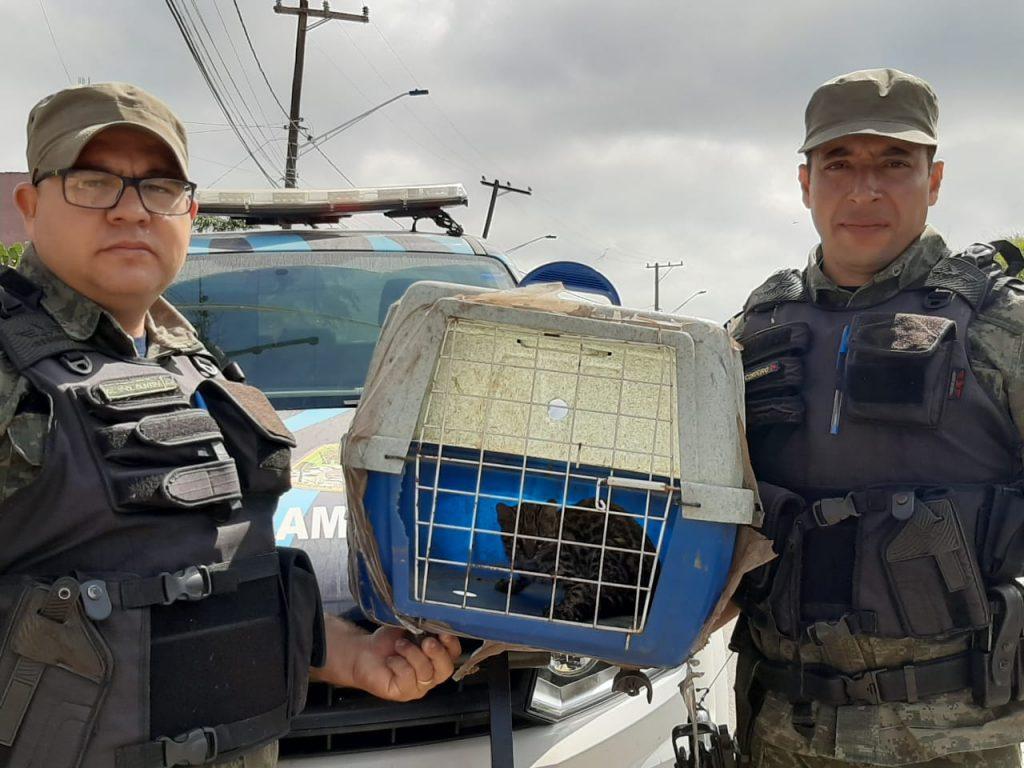 animal resgatado cotia