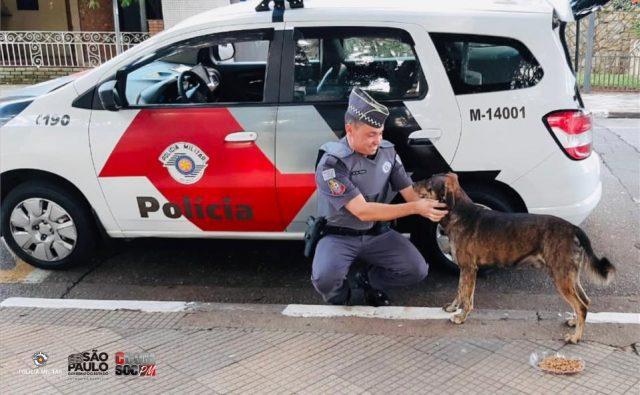policiais animais rua osasco