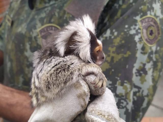 Polícia ambiental encontra animais silvestres em Santana de Parnaíba